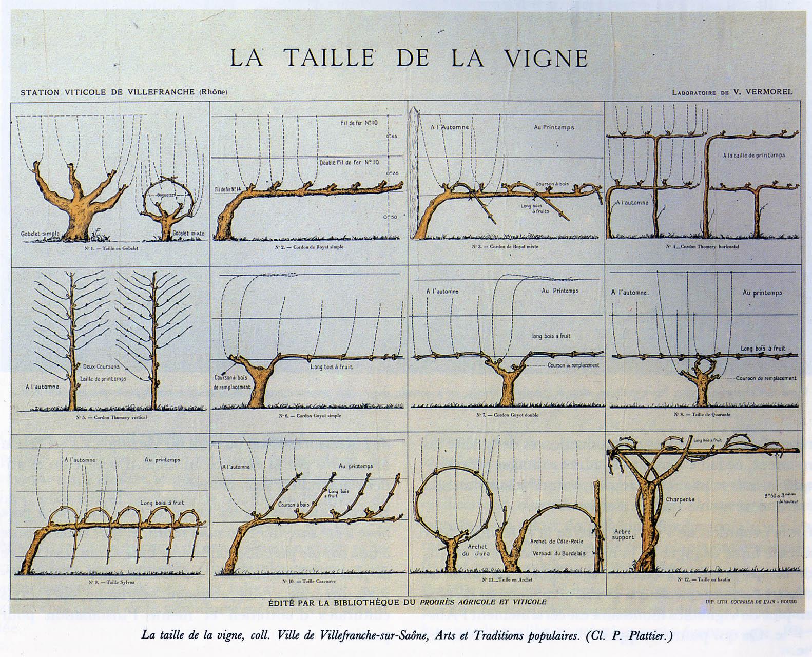 Culture de la vigne frise chronologique histoire du vin - Entretien de la vigne ...