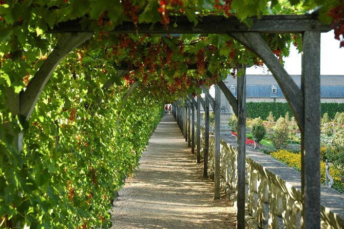 Culture de la vigne frise chronologique histoire du vin inrap - Comment tailler une treille de raisin ...