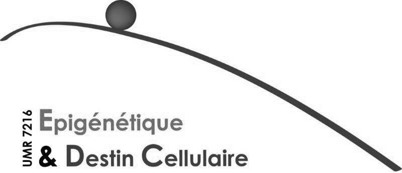 Epigénétique & Destin Cellulaire
