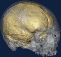 Cro-Magnon et son cerveau