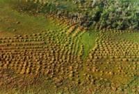 Archéologie et écologie des savanes de Guyane