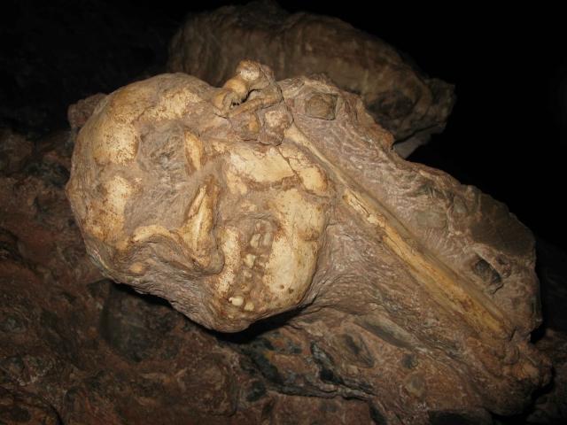 Les fossiles humains d'Afrique, état des lieux