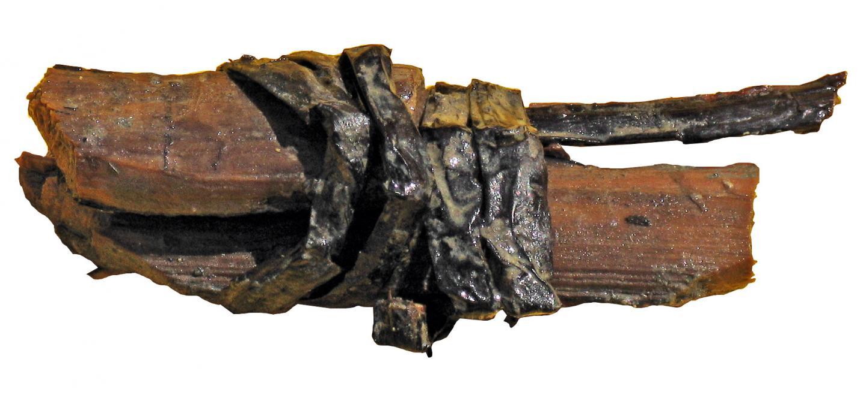 Fragment de cerclage encore maintenu par sa ligature en brin de saule, Chanteloup-en-Brie (Seine-et-Marne), 2011.