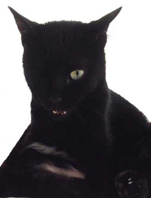 « Peu importe que le chat soit gris ou noir pourvu qu'il attrape les souris »