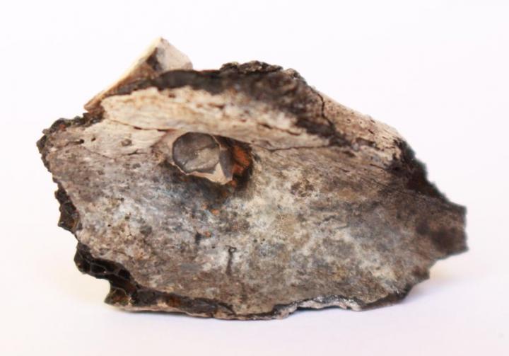Pointe de projectile fichée dans l'omoplate gauche de l'individu du site de Beisamoun (7100-6400 avant notre ère)