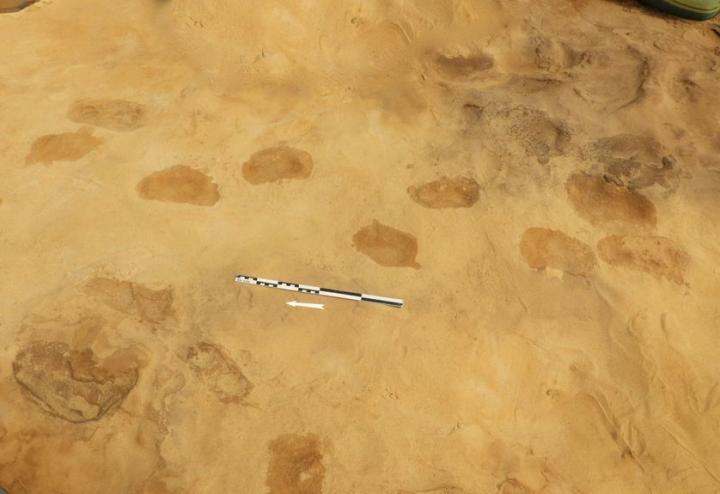 Empreintes de pas retrouvées sur le site de Rozel (Normandie)