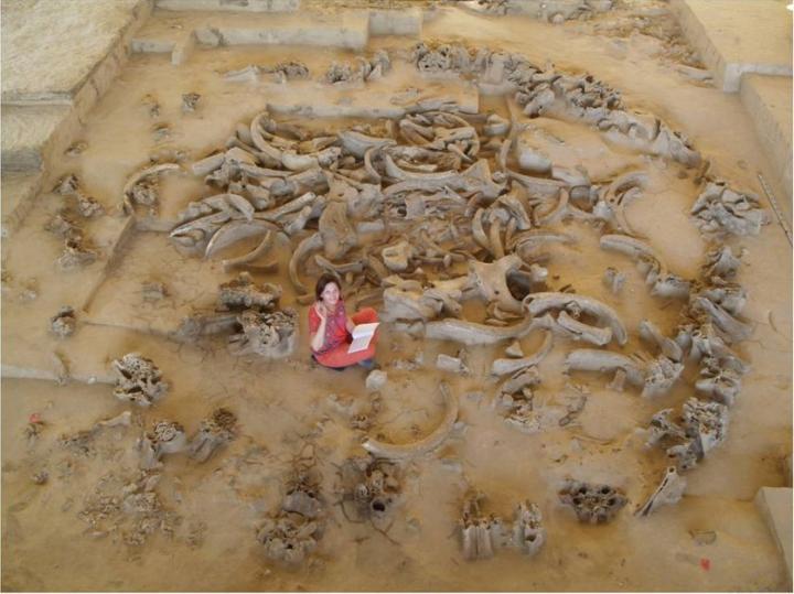 Cabane n°5 découverte sur le site de Gontsy (Ukraine)