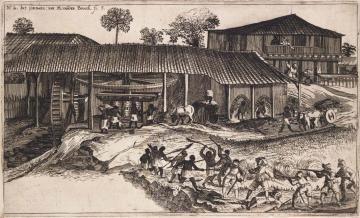 Une des plus anciennes habitations-sucreries découvertes en Guadeloupe