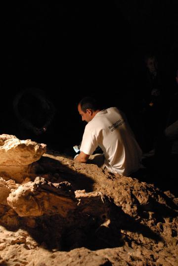 Little Foot, l'australopithèque sud-africain, aussi vieux que Lucy?