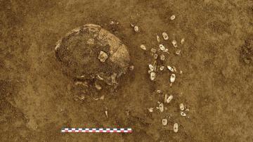 Détail du crâne de l'individu inhumé entouré des parures en coquillages (St. 1019)
