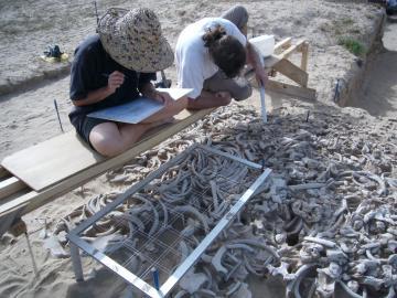 Découverte du plus ancien sanctuaire d'Arabie : la structure en os de dugong de l'île d'Akab