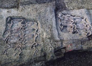 Après la sépulture multiple d'hommes et de chevaux, des fosses à chevaux ... (Puy-de-Dôme)
