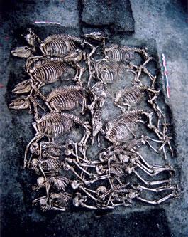 Huit hommes et leurs chevaux : une sépulture multiple en terre arverne (Le Cendre, Puy-de-Dôme)