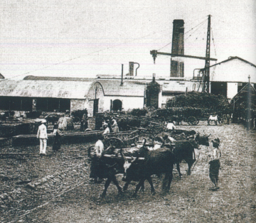 La place pavée au XIXe siècle. Usine sucrière de Vue Belle à la Saline en activité, carte postale de la fin du XIXe siècle. ADR.