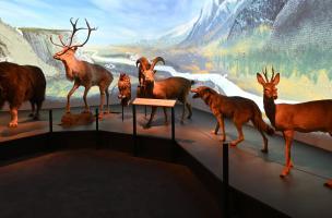 Muséum Néandertal 3