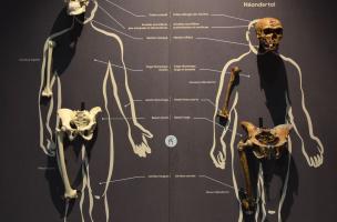 Muséum Néandertal 5