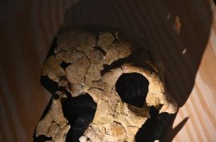 Muséum Néandertal 1