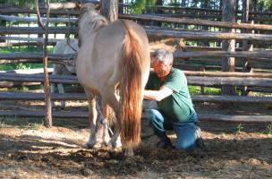Éleveur de chevaux (Iakoutie)