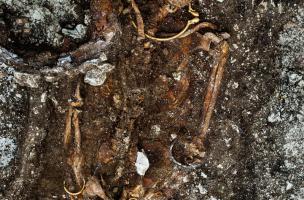 Le prince de Lavau repose avec une riche parure, composée en particulier d'un torque et de bracelets en or, mais aussi de bijoux en ambre, en fer et en corail. Il a été retrouvé dans un complexe funéraire daté du Ve s. avant notre ère, à Lavau (Aube) 2015
