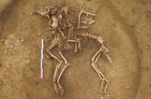 Dépôt d'un chien et d'un ovicapriné - un mouton ou une chèvre - au fond d'un silo, entre 450 et 350 avant notre ère, Obernai (Bas-Rhin), 2013.