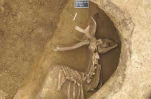Dépôt d'une partie de cerf dans un silo, entre 450 et 350 avant notre ère, Obernai (Bas-Rhin), 2013.