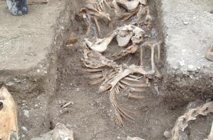 Tranchée en zig-zag abritant des chevaux, probablement morts dans un incendie au cours de la deuxième guerre mondiale, Bar-sur-Aube (Aube), 2013.A gauche de la tranchée, un archéologue met au jour une sépulture gallo-romaine.