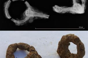 Mors d'animaux en fer et leur radiographie, habitat de La Claraiserie, IIes. avant notre ère - Iers. de notre ère,Ossé (Ille-et-Vilaine), 2013.Les Gaulois utilisaient les chevaux comme montures mais aussi, au même titre que les bœufs, en attelage de tr
