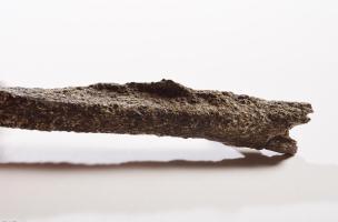 Détail de la trace d'enthésopathie de l'os du bras gauche d'un pré-Néandertalien retrouvé sur le site de Tourville-la-Rivière (Seine-Maritime), en 2010.  L'enthésopathie est une anomalie (crête inhabituelle à l'endroit de l'attache du muscle deltoïde post