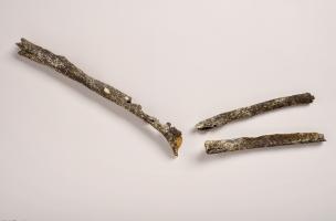 Trois os longs du bras gauche d'un pré-Néandertalien (humérus, cubitus et radius) retrouvé sur le site de Tourville-la-Rivière (Seine-Maritime), en 2010.  Le bras entier de ce pré-Néandertalien a dû être charrié par la Seine avant de se déposer, sur les b