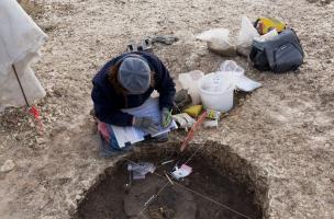 Fouille du contenu d'une urne en céramique provenant d'une tombe princière datée du début du Ve siècle avant notre ère, découverte dans un complexe funéraire monumental exceptionnel, mis au jour à Lavau (Aube).