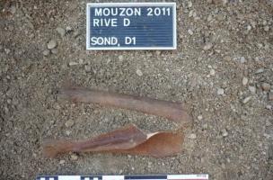 Membre d'Equus hydruntinus en connexion anatomique, sur une île fossile de la Meuse lors d'un diagnostic effectué en  2011 au préalable à la construction d'un barrage - Mouzon (08)