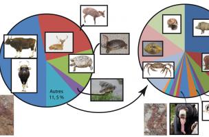 Répartition taxonomique de la faune du site de Doi Pha Kan