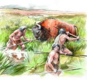 Découpe d'un bison pour retrouver les gestes et les techniques de l'Homme de Néandertal