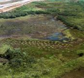 Champs surélevés précolombiens adjacents au site sur chenier de Bois Diable, juste en haut à gauche