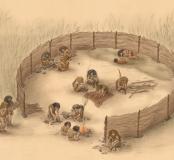 Néandertal : si loin, si proche