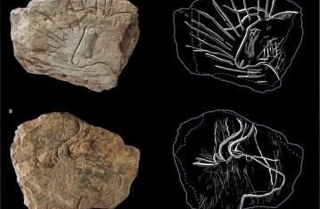 L'art préhistorique : le psychanalyste et l'archéologue