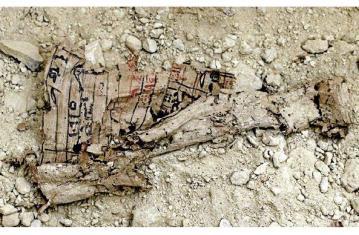 Les papyrus de la Mer rouge