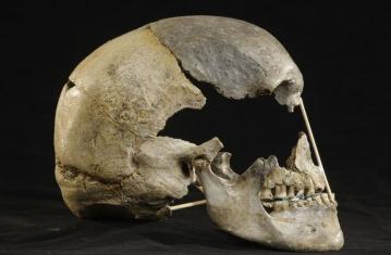 L'Homme moderne est-il un néandertalien qui s'ignore ?