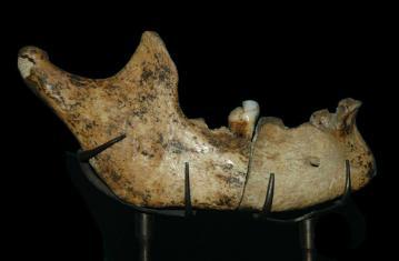 La place du faux en archéologie