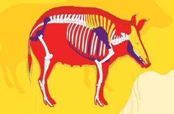 Archéo animaux. L'incroyable histoire de l'archéologie des animaux