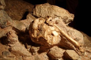 Dernières nouvelles de la préhistoire