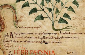 Archéopages 43 : Médecines